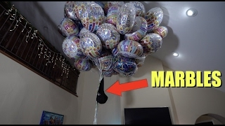 How Many Balloons Does It Take To Make Your Dog Fly | What's Trending Now!
