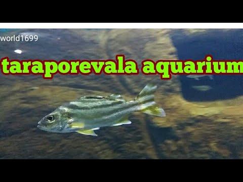 Taraporevala aquarium 100 species of Marine and Fresh Water Fish