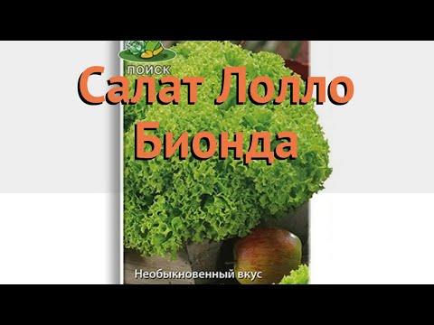 Салат обыкновенный Лолло Бионда Полукочанный 🌿 обзор: как сажать, семена салата