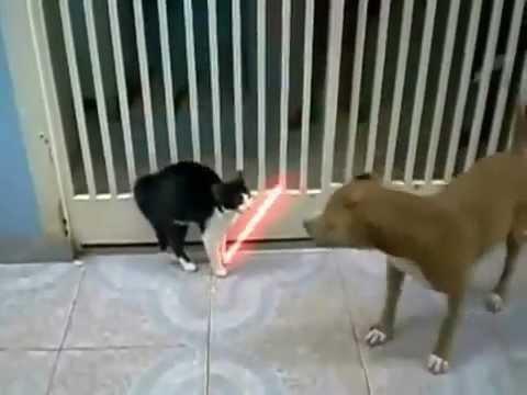 """chó mèo đánh nhau theo phong cách """"Star Wars"""""""