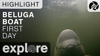 First Day On The Boat With the Belugas - Live Cam Highlight thumbnail