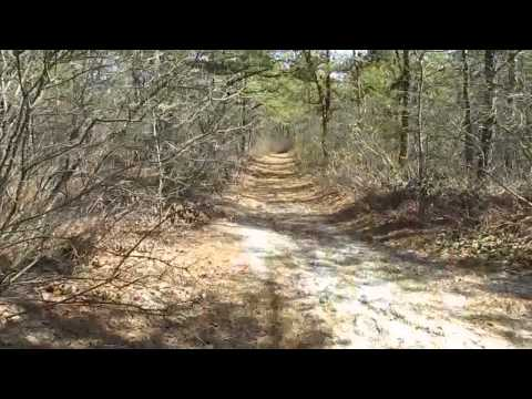 New Jersey Piney Power show HD: 2nd look at the Ocean County College woods