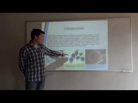 Giardia, Cryptosporidium y Microsporidium - Samuel Villaverde