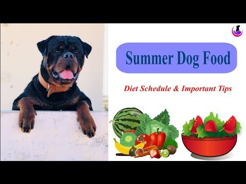 SUMMER DOG FOOD: Special Care Tips II dog and vet II Hindi