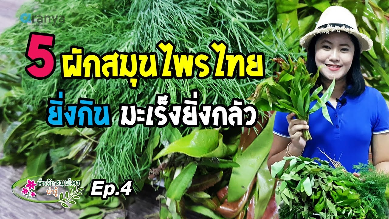 5 ผักสมุนไพรไทยยิ่งกินมะเร็งยิ่งกลัว พืชผักสมุนไพรน่ารู้ Ep.4  Aranya Channel