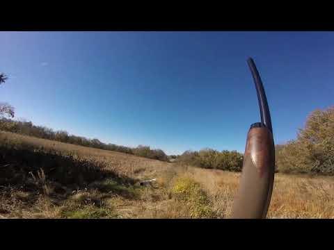 Quail Hunting In Peculiar MO