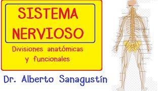 Sistema Nervioso explicado fácil: anatomía y fisiología