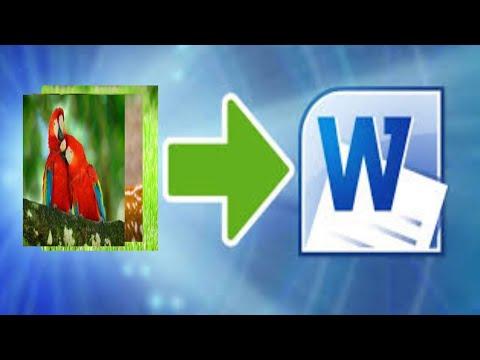 Cara memindahkan foto dari galeri ke Microsoft word di hp ...