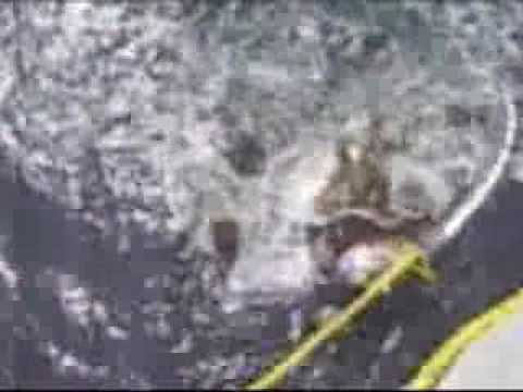 RAW VIDEO Rescue of a leatherback sea turtle near Big Sur