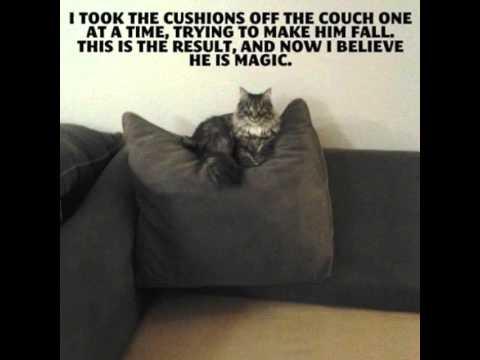 Cute Pillow Puns : #Magic #Cushions #Pets #Cats #Pillow #MumsStop #Love #Cute #Humour (Credit to Best Funny Jokes 4 ...