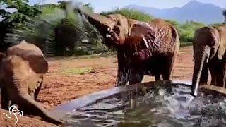 Orphan Elephants' Journey To A New Home