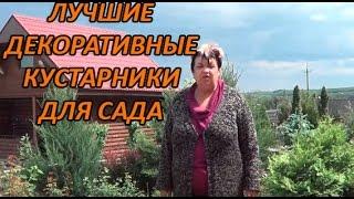 видео Вейгела
