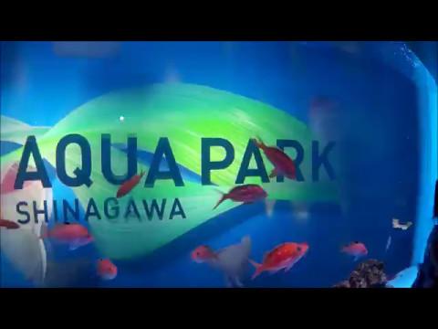 DENTRO DO AQUÁRIO AQUA PARK SHINAGAWA TOKYO CANAL ALECS JAPAN LIFE