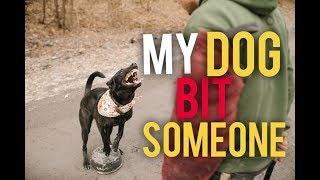 Why did my dog bite? Did my dog bite from aggression? - Dog Training with America's Canine Educator