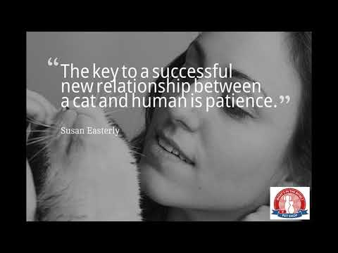 dog-and-cat-quotes-video
