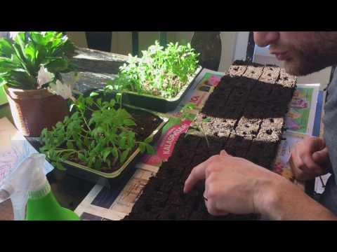 Soilblocking - Things To Consider
