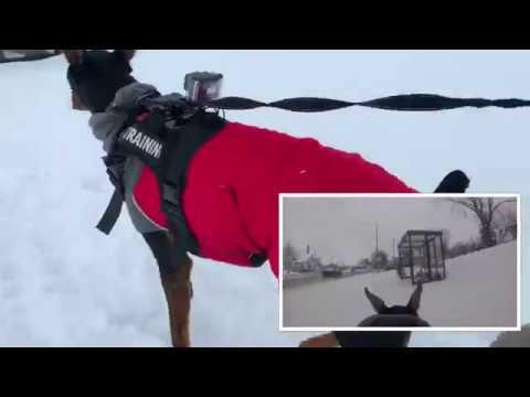 I Put A GoPro On My Doberman | Dog FPV Vlog