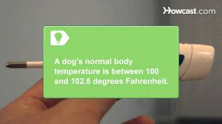 How to Recognize Heatstroke Symptoms in Dogs