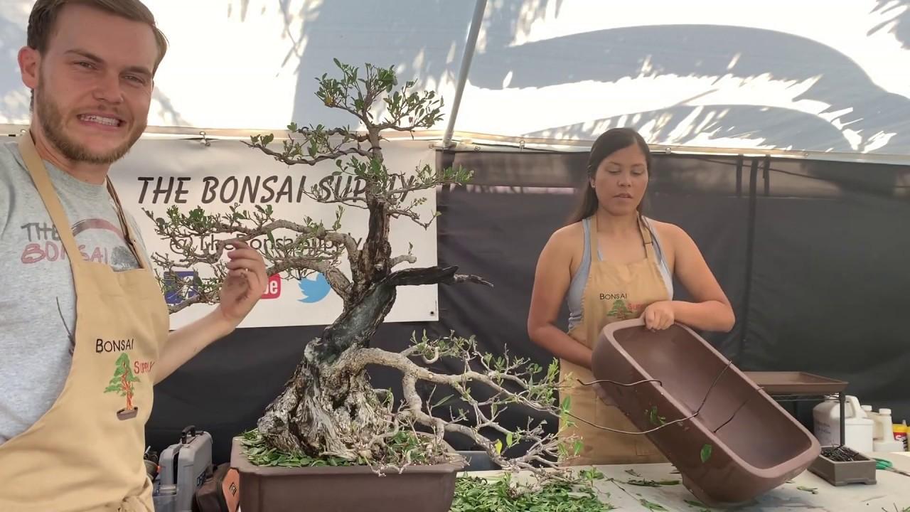 Jim Smith S Bonsai Collection At The Heathcote Botanical Garden Youtube