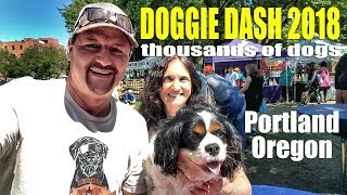Portland Doggie Dash 2018 | Oregon Humane Society | Travel Events