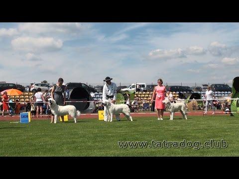 Tatra Shepherd Dog. IDS Czestochowa-Konopiska 23.07.2016 Poland
