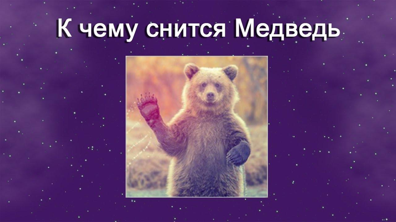 К чему снится Медведь – толкование сна по Соннику