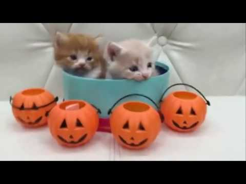 Cute kittens and puppies - Cute kittens meowing | HD