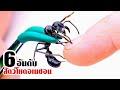 6 สัตว์ที่โหดเหี้ยมที่สุด แห่งป่า-แม่น้ำอเมซอน!! (ระวังกันด้วย!!)