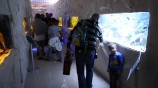 Otwarcie Oceanarium w Blue City