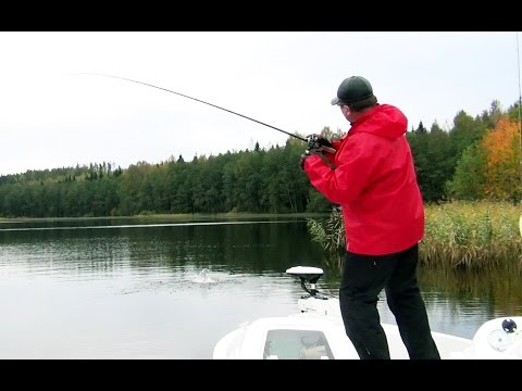 рыбалка в санкт-петербурге и ленинградской области щука
