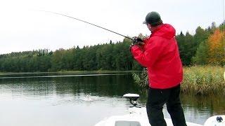 Любимовское озеро в Ленинградской области. Ловля щуки на воблеры.