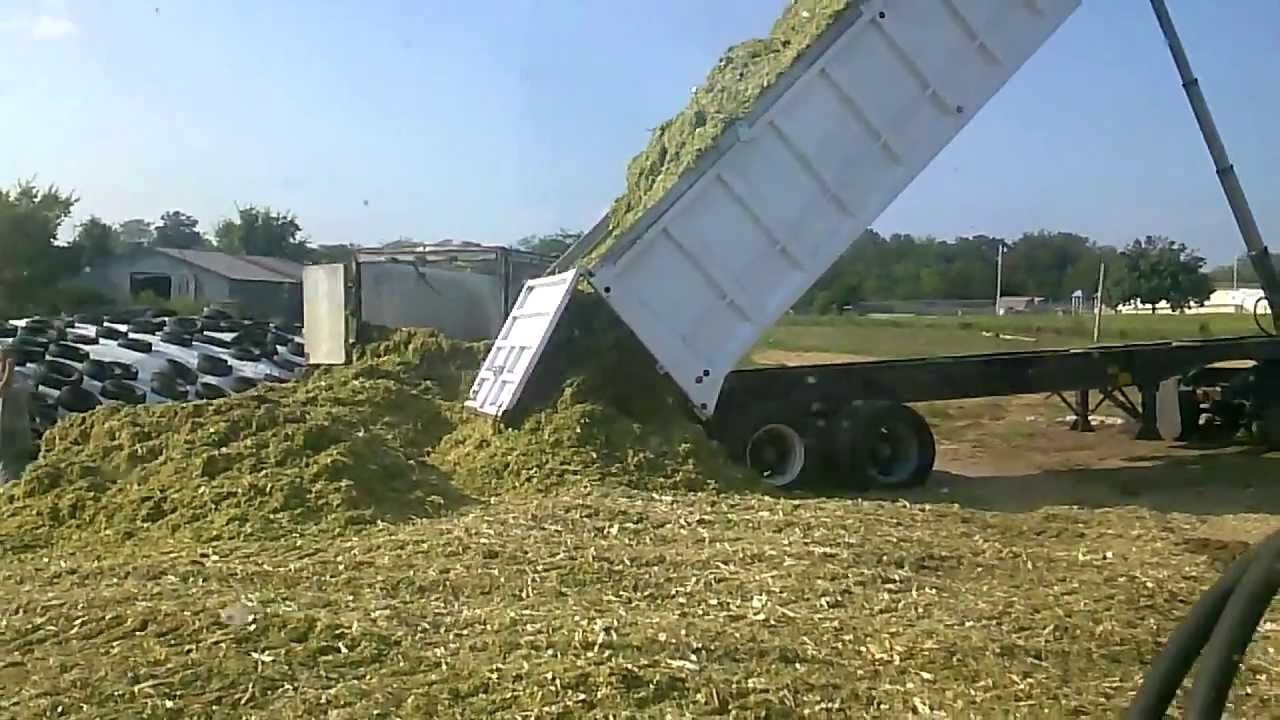 End Dump Truck >> 1980 Benson 30' End-Dump Trailer Dumping Corn Silage (2)- Sept. 2013- Cupps Farms- Shell Knob ...