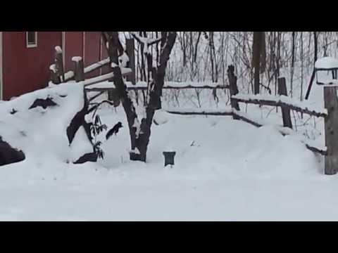 funny-drunk-squirrel-video