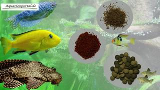 Aquariumfische richtig füttern - Aquarienportal