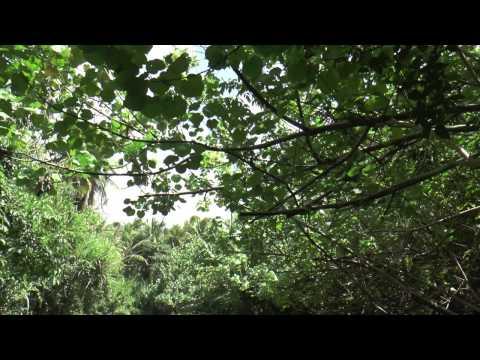 Dominica: Like A Local