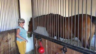 """Условия содержания животных в фермерском хозяйстве """"Kamadhenu"""""""