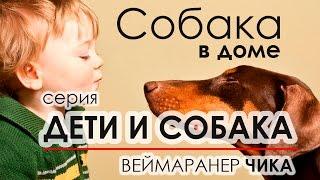 Дети и собака. Веймаранер Чика. \