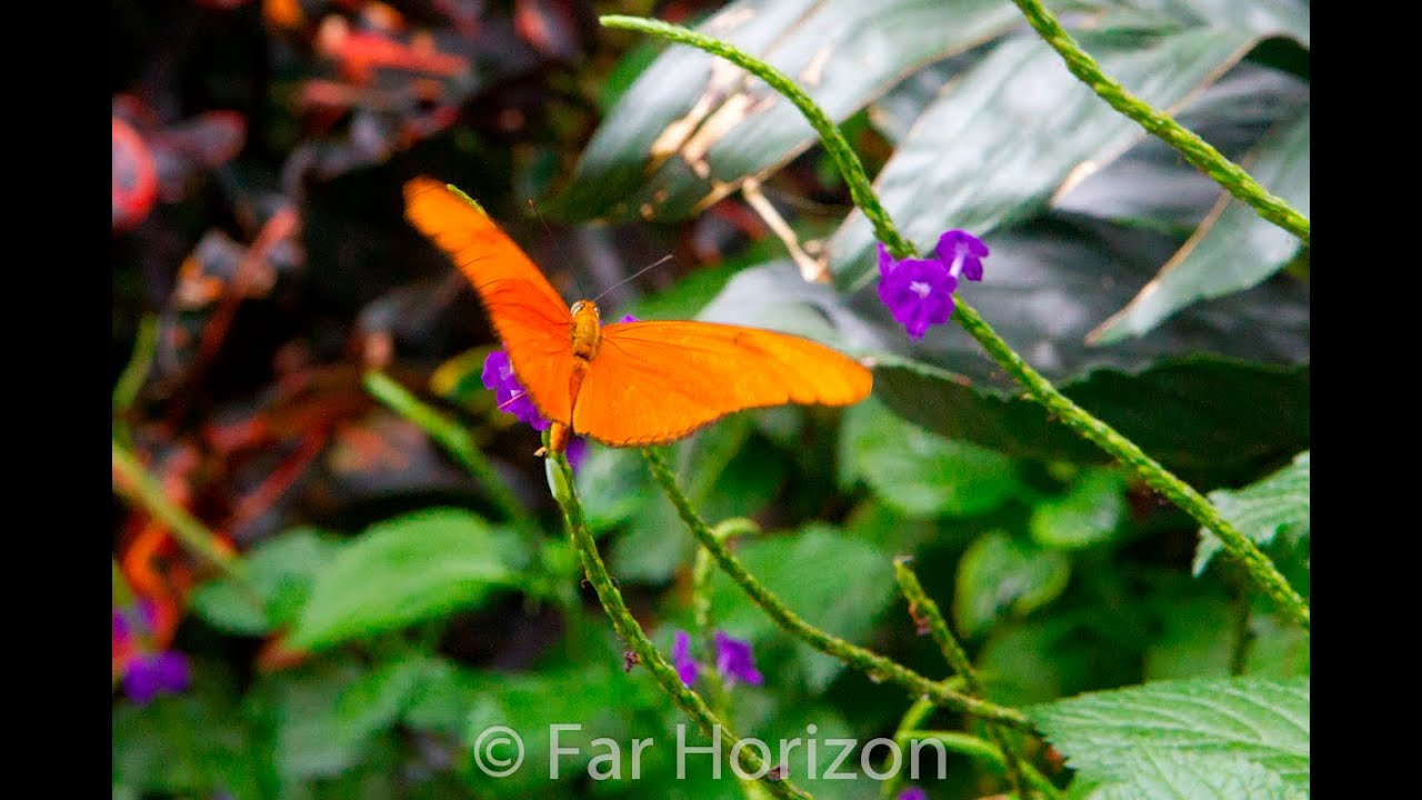 butterfly conservatory niagara falls youtube. Black Bedroom Furniture Sets. Home Design Ideas