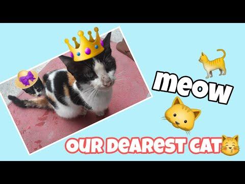 OUR QUEEN CAT  PLUS ITS CUTE LITTLE KITTEN