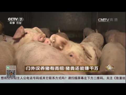20170307 致富经  门外汉养猪有高招 猪粪还能赚千万