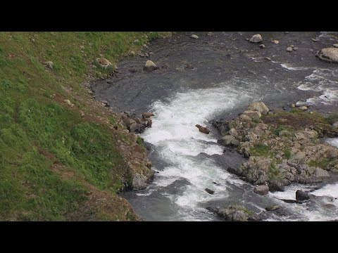 Proposed Alaska Mine Could Threaten Salmon Population