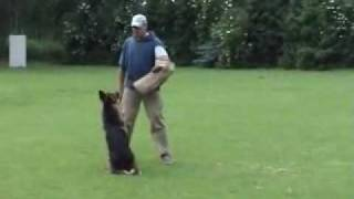 Bakersfield Dog,  Protection Class 4, Tarek (theo) Schutzdienst 1,