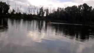 Река Десна. Купание на косе.(Река Десна. Коса. 14.06.2014., 2014-06-23T09:16:44.000Z)