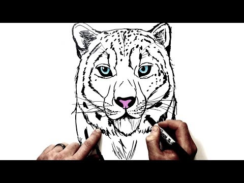 How To Draw A Snow Leopard Cute And Easy Step By Step Drawing Mp3