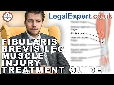 Fibularis Brevis Leg Muscle Injury Treatment Guide ( 2019 ) UK