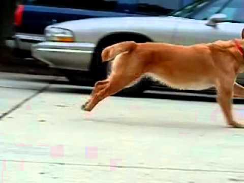 dog bunny hop