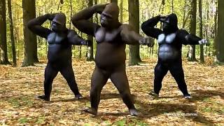 "PSY - GANGNAM STYLE  ""Dancing Apes""  (강남스타일)"