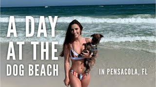 A day at the dog beach!  in Pensacola, FL