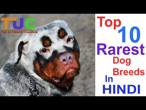 Top 10 Rarest Dog Breeds | Top 10 |  Dog Information | The Ultimate Channel