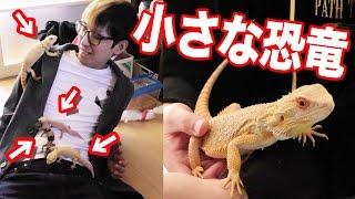 静岡県で小さな恐竜たちに襲われました… ガッキー時計 検索動画 13